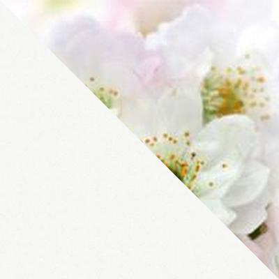 Фотопечать Цветы №6 / ЛДСП Белая